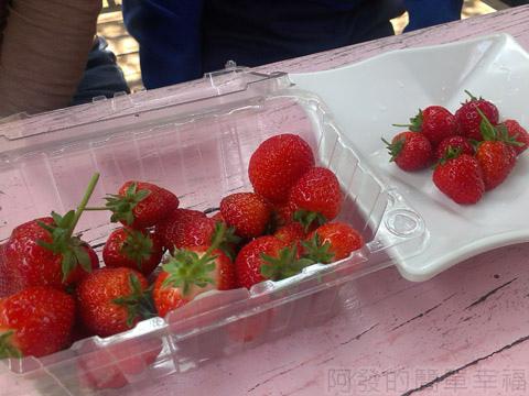 內湖碧山路採草莓I-24莓圃-趁新鮮品嚐