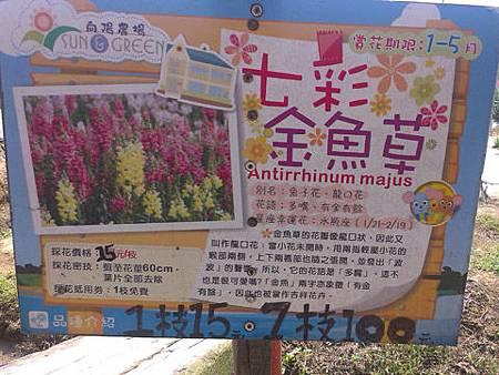 桃園觀音向陽農場II-09七彩金魚草介紹