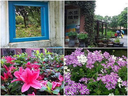 陽明山花卉試驗中心all