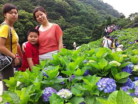 竹子湖-大梯田繡球花海22