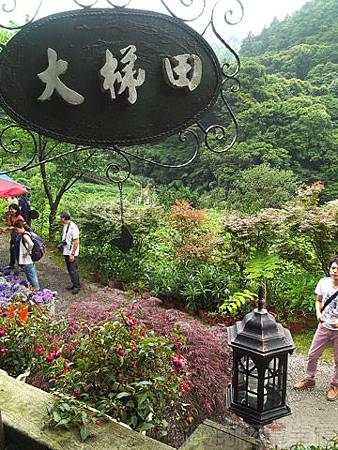 竹子湖-大梯田繡球花海28