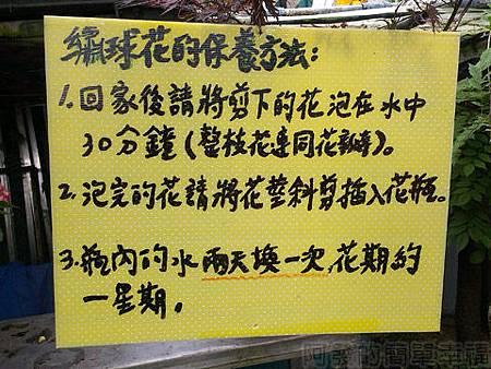 竹子湖-大梯田繡球花海41-繡球花保養方法