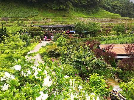 竹子湖-大梯田繡球花海16-餐廳及盆景休息區