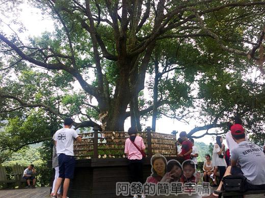 新社-薰衣草森林35許願樹區-許願樹