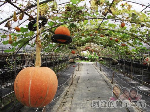 南瓜王國(旺山休閒農場)22南瓜隧道II
