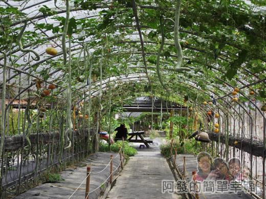 南瓜王國(旺山休閒農場)30蛇瓜隧道