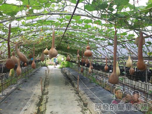 南瓜王國(旺山休閒農場)29葫蘆仙境