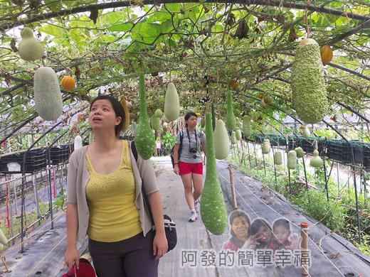 南瓜王國(旺山休閒農場)31瓜瓜隧道