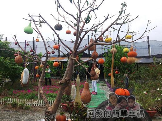 南瓜王國(旺山休閒農場)39中庭-南瓜樹