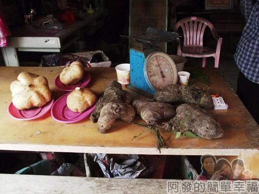 八連溪有機生態村之旅II11豆薯與野生山藥