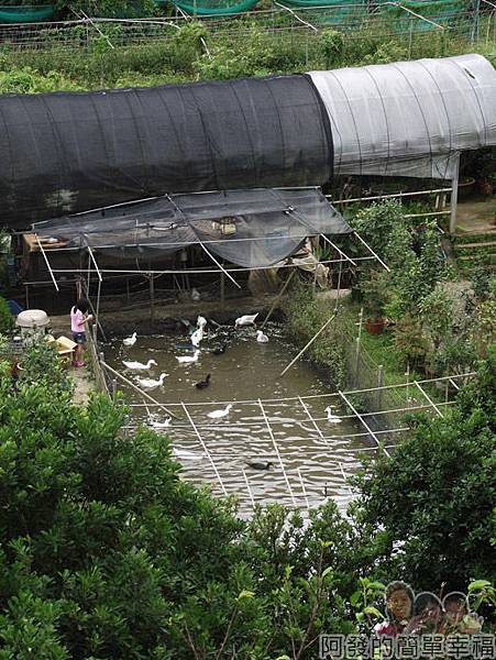 八連溪有機生態村之旅II17番婆林休閒農場-鴨池