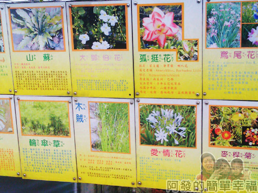 八連溪有機生態村之旅II21番婆林休閒農場的植物
