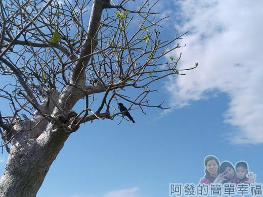 冬山河自行車專用道36湛藍的天空與樹梢上的燕子