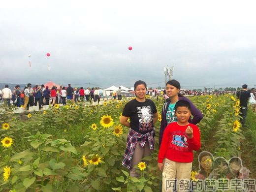 2014新社花海04-向日葵區留影-9號區