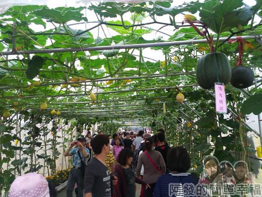 2014新社花海11-蔬果廊道
