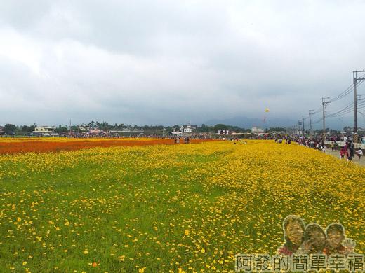 2014新社花海20-波斯菊花海-18號區