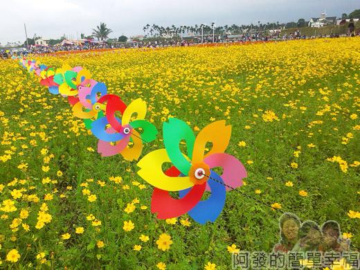 2014新社花海21-波斯菊花海上的風車-18號區