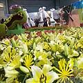 臺北花卉裝置藝術設計大展37-花漾荷蘭-繽紛的花田