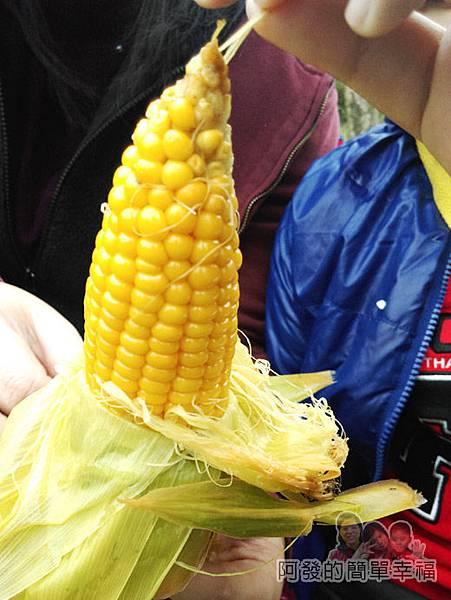 宜蘭大同清水地熱34-玉米黃的很漂亮看起來就很美味.jpg