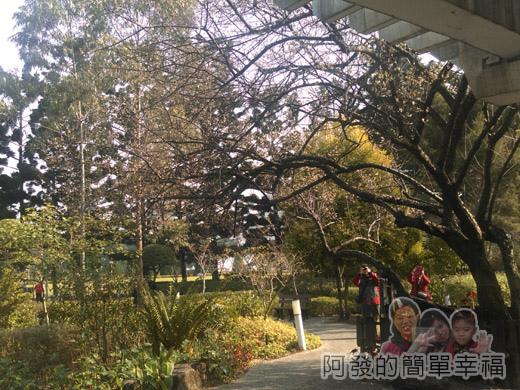 中正紀念堂梅景13-雲漢池旁-樂活花園-老梅樹(果梅)