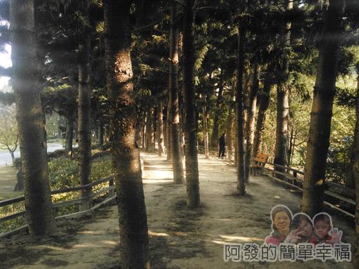 中正紀念堂梅景19-南洋杉步道