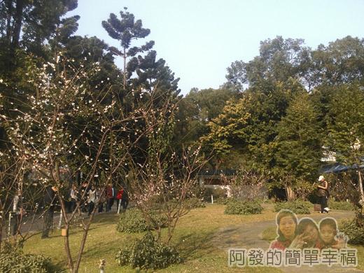 中正紀念堂梅景26-杭州南路與信義路出口-純香梅花區