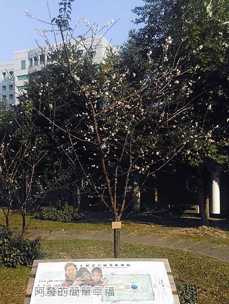 中正紀念堂梅景29-杭州南路與信義路出口-純香梅花區