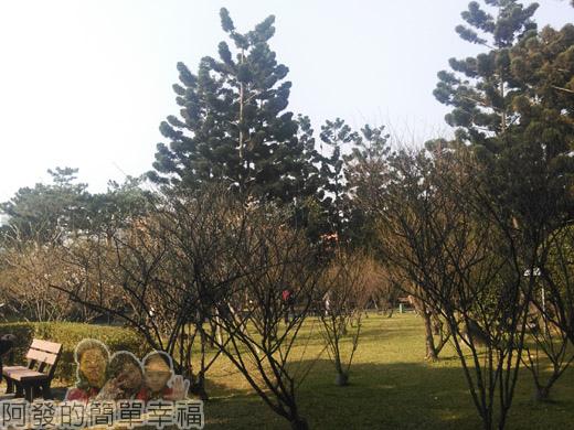 中正紀念堂梅景37-大忠門旁-宮粉梅與果梅區