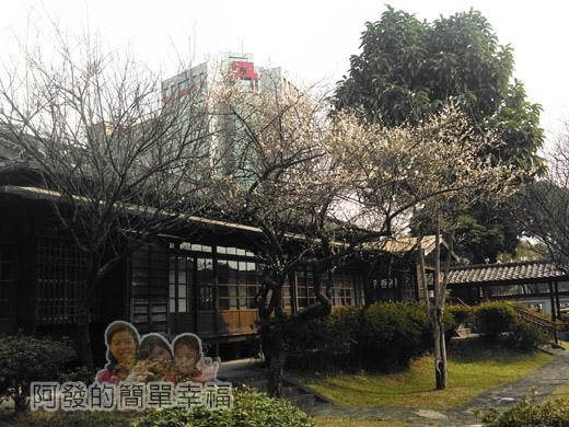 逸仙公園12-梅樹