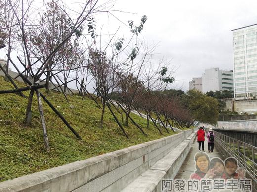 樂活公園賞寒櫻20-未開花的山櫻步道