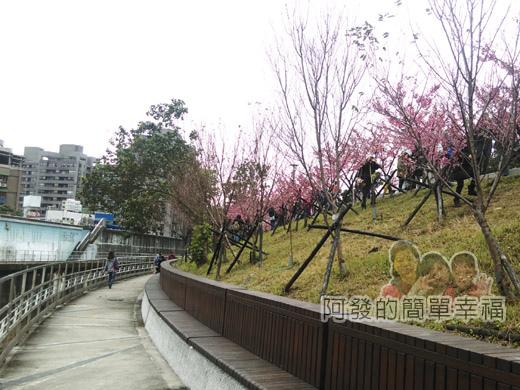 樂活公園賞寒櫻21-溪旁步道