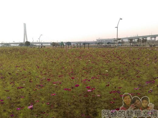 大臺北都會公園II22-幸福水漾公園-野花遍開.jpg