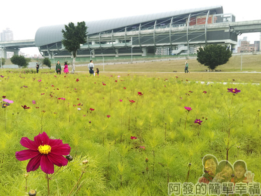 大臺北都會公園II26-幸福水漾公園-波斯菊與捷運站.jpg