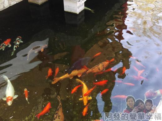 壽山巖觀音寺09-於水池中的魚群