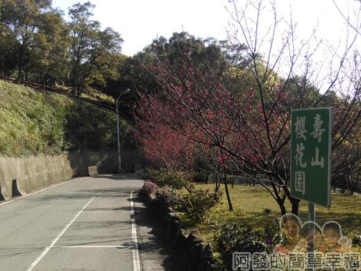 壽山巖觀音寺18-壽山櫻花園