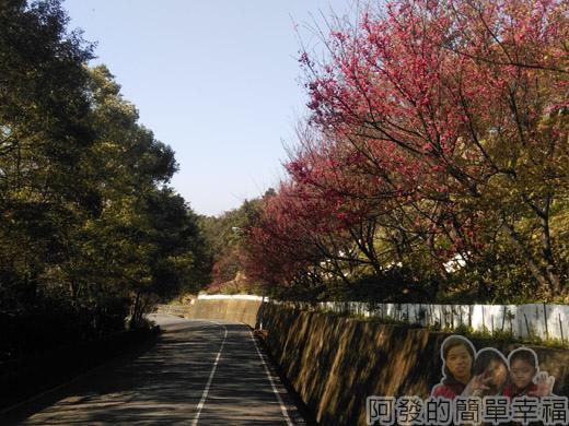 壽山巖觀音寺20-櫻花林車道