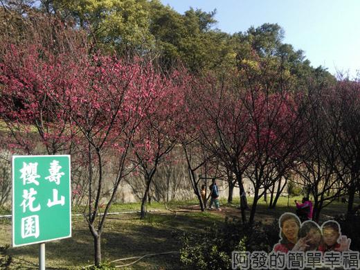壽山巖觀音寺27-壽山櫻花園
