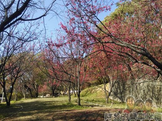 壽山巖觀音寺29-櫻花林