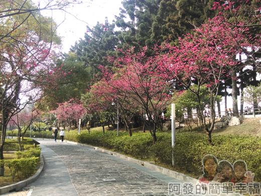 中正紀念堂八重櫻與宮粉梅雙綻37-美麗的緋紅步道