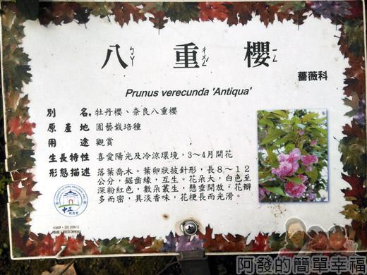 中正紀念堂八重櫻與宮粉梅雙綻07-八重櫻說明