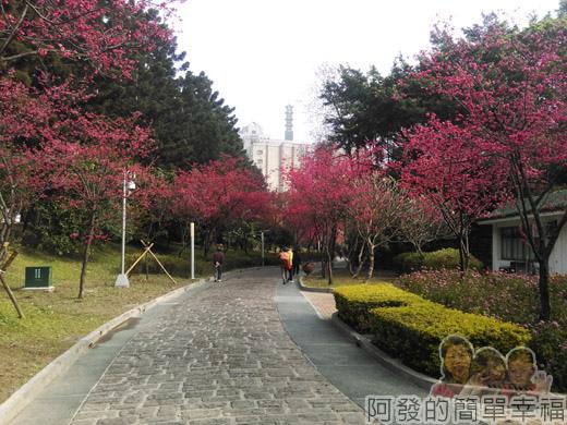 中正紀念堂八重櫻與宮粉梅雙綻16-中正紀念堂正後方美麗的緋紅步道