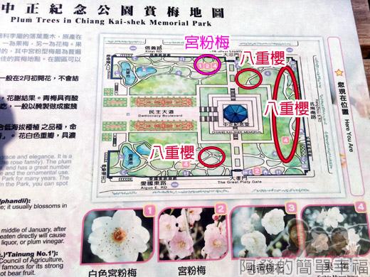中正紀念堂八重櫻與宮粉梅雙綻28-梅景地圖