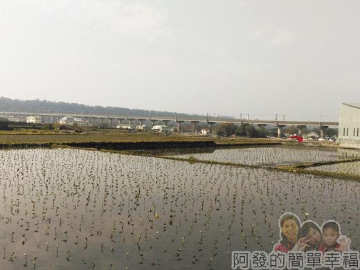 春遊泰安尋櫻趣06-田園