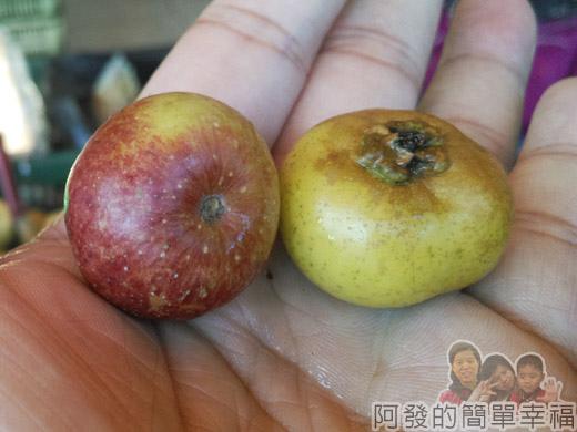 角板山-水果行05-櫻桃小蘋果外觀
