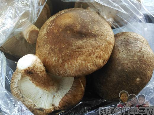角板山-生段木菇外觀01
