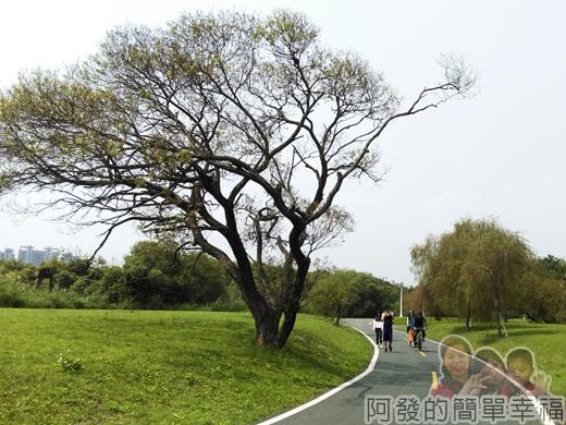 公館景福租借站-大稻埕租借站26-華中橋至光復橋路段-外觀讓人有感覺的大樹