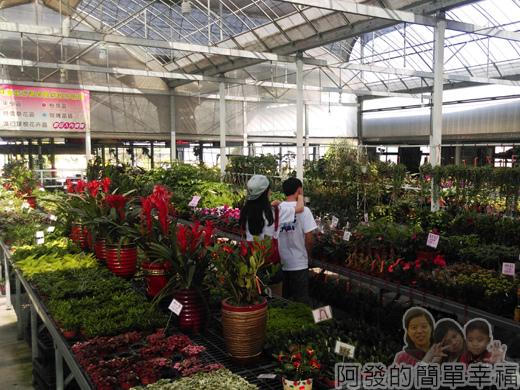 中社觀光花市05-園藝盆栽資材區III