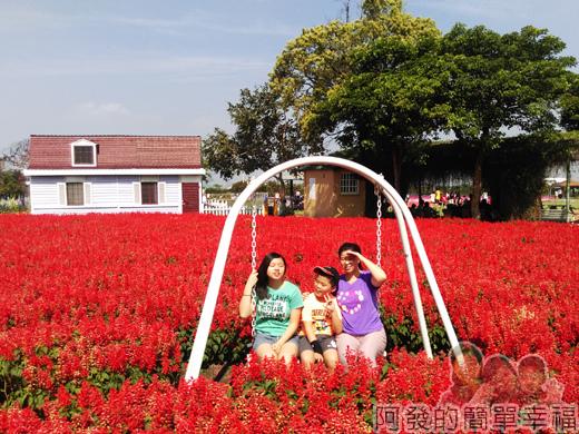 中社觀光花市22-一串紅花海區與盪鞦韆