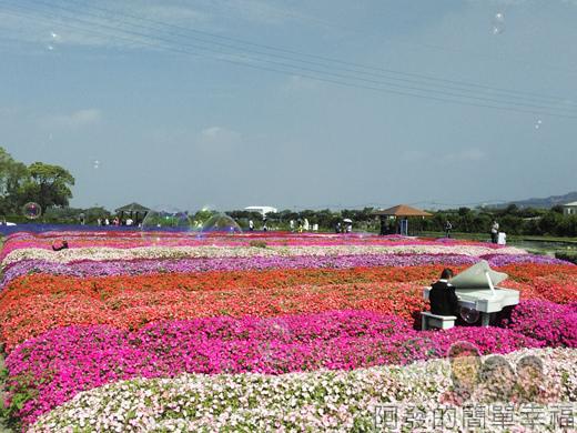 中社觀光花市40-吹泡泡讓花海更有浪漫感覺