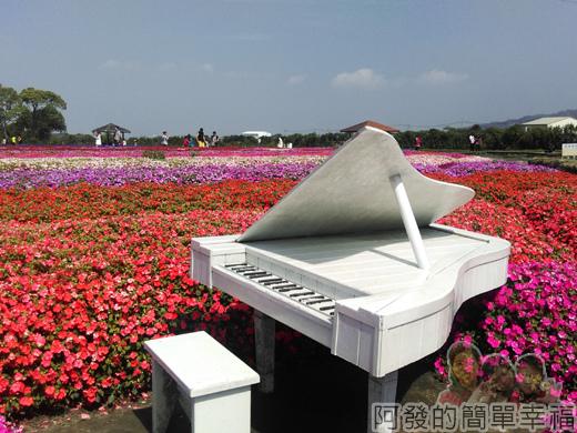 中社觀光花市41-花海間的白鋼琴